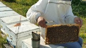 Aşırı sıcaklara karşı arıları koruyun
