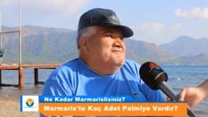 Ne Kadar Marmarislisiniz Marmaris'te Kaç Adet Palmiye Vardır ?