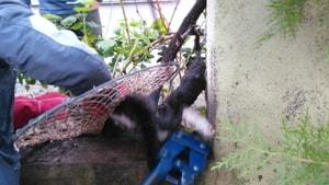 Ayağına demir saplanan kedi kurtarıldı