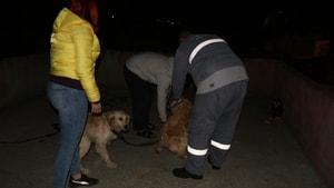Köpeklerini kemerle döven şahıs gözaltına alındı