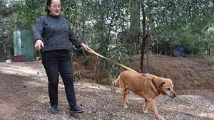 Sokak hayvanlarının doktor annesi