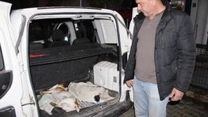 Bodrum'da köpek katliamı