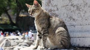 Kedi nüfusu kontrol altına alınıyor