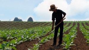 Muğla çiftçisinin sorunları Ankara'ya taşındı