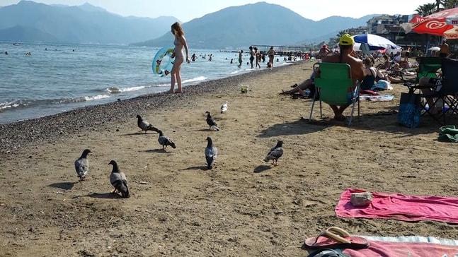 Plajın sevimli sakinleri