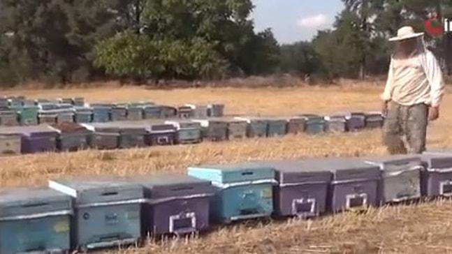 Arılar açlıkla karşı karşıya
