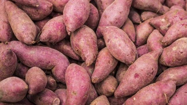 'Tatlı Patates'e Güney Ege'de ilgi giderek artıyor.